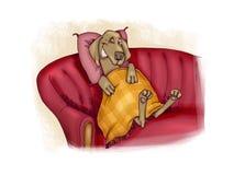 Happy dog on sofa. Humor illustration of happy dog on sofa Stock Photo