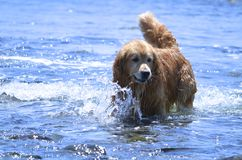 Happy dog in summer Royalty Free Stock Images