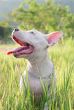 Happy dog on sunny day. Lovely puppy going to walk on beautiful day Stock Image