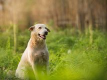 Happy dog at sunset time Stock Images