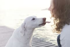 Happy dog tries to give a kiss to his owner Stock Images