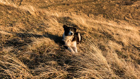 Happy dog under a warm autumn light Royalty Free Stock Image
