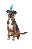 Happy Dog Wearing Birthday Hat Stock Images