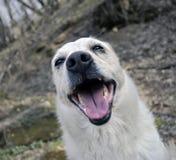 Happy dog Royalty Free Stock Image