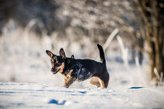 Happy dog in winter time royalty free stock photo