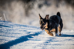 Happy dog in winter time stock photo