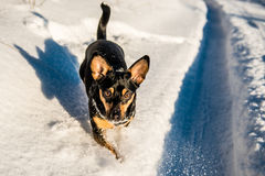 Happy dog in winter time stock photos