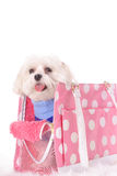 Happy doggy travel tote Royalty Free Stock Image