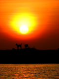 Happy Dogs. A pack of wild dogs sitting while the sun sets Royalty Free Stock Images