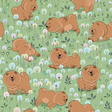 Happy dogs on the blossoming field Royalty Free Stock Image