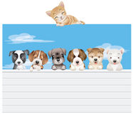Happy dogs & cat Royalty Free Stock Photo