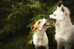 Happy dogs filtered. Two happy dogs are playing together, glow filter royalty free stock images