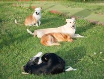 Happy dogs free Stock Photos
