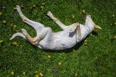 Happy dogs royalty free stock photos