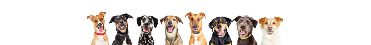 Happy Dogs In A Row - Leaderboard. Row of happy dogs in a standard 728 x 90 leaderboard with room for text Royalty Free Stock Photos