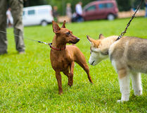 Happy dogs stock images