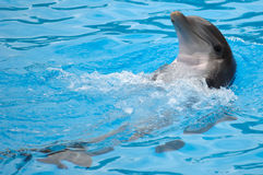 Happy dolphin. Is swimming in the water stock image