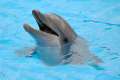 Happy Dolphin Stock Photography