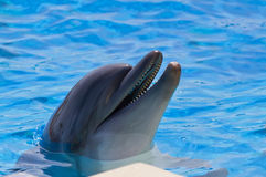 A happy dolphin in a pool. A dolphin in a pool smile to people Stock Photo