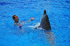 Happy dolphin and trainer Royalty Free Stock Images