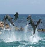 Happy Dolphins stock photo