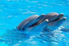 Happy dolphins Stock Image