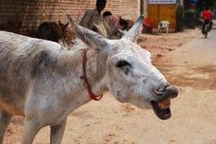 Happy Donkey royalty free stock photography
