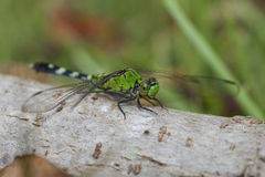 Happy dragonfly Stock Photography