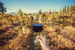 Happy drinker hand with wine glass. Natural grape yard farm at morning. Happy drinker hand with wine glass. Natural grapeyard farm at sunny morning stock photography