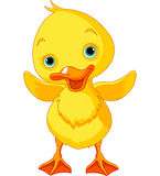 Happy Duckling Stock Image