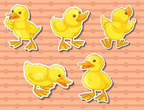 Happy ducklings Stock Images