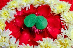 Happy Dussehra greeting card , green leaf. And rice royalty free stock photo