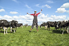 Happy dutch farmer with his cows Royalty Free Stock Images