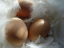 Happy easter!. Eggs in a bed of feathers Stock Photos