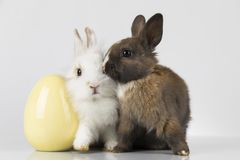 Little baby rabbit and easter eggs, white background stock photo
