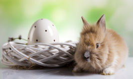 Happy easter, Baby bunny, springtime. Curious Bunny, springtime colorful bright theme Royalty Free Stock Image