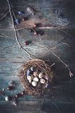 Happy Easter Background with Chocolate, Bird Nest on Tree Branch. On wooden Background stock photo