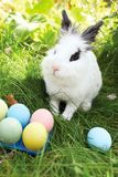 Happy Easter! Background with colorful eggs in basket. Easter bunny and Easter eggs on green grass Stock Photography