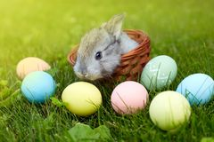 Happy Easter! Background with colorful eggs in basket. Easter bunny and Easter eggs on green grass Stock Images