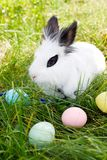 Happy Easter! Background with colorful eggs in basket. Easter bunny and Easter eggs on green grass Royalty Free Stock Photography
