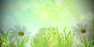 Happy easter. Background green with daisy and eggs Stock Photography