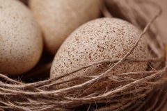 Happy Easter. Background with natural eggs in the nest. Beautiful holiday card Stock Photos