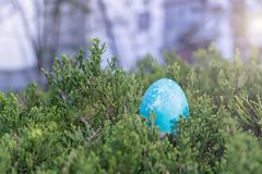 Happy easter, blue organic easter eggs hiding on the tree, easter holiday decorations, easter concept backgrounds. With copy space Royalty Free Stock Photos