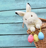 Happy Easter Bunny in basket and eggs on blue background. Royalty Free Stock Images