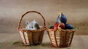 Happy Easter, bunny in basket stock video footage
