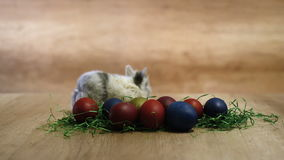 Happy Easter, bunny playing with painted eggs stock footage