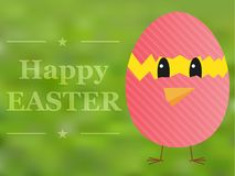Happy Easter card with chicken in broken egg painted pink Stock Photos