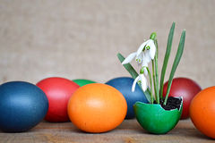 Happy Easter card with Colorful Easter eggs and spring flowers planted in eggshell  Royalty Free Stock Photo