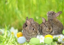 Happy Easter card with copy space. Easter bunnies. Stock Photo