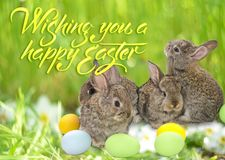 Happy Easter card with copy space. Easter bunnies. Royalty Free Stock Image